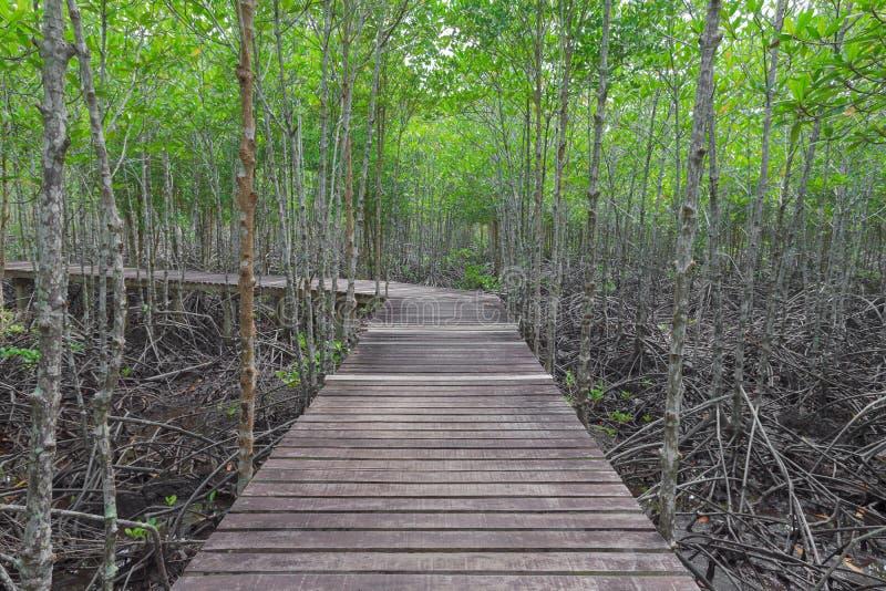 Pont en bois dans la forêt de palétuvier photo libre de droits