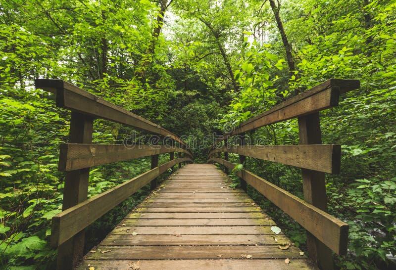 Pont en bois dans la forêt verte images stock