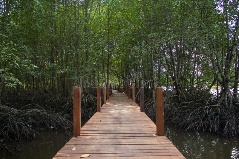 Pont en bois dans la jungle de palétuvier sur l'eau images libres de droits