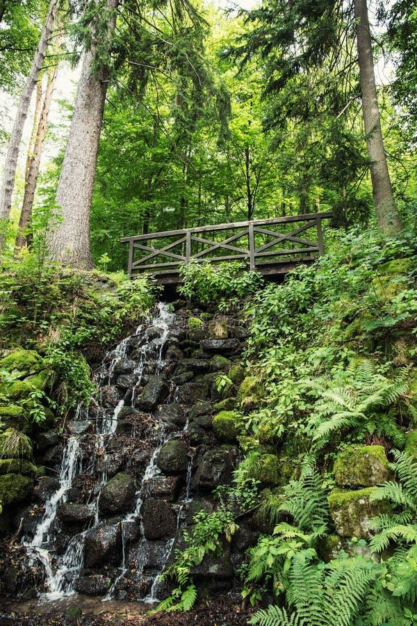 Pont en bois et cascade avec des usines de fougère dans la forêt européenne photos stock