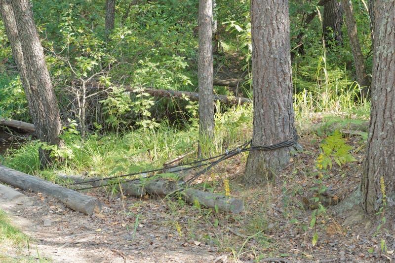 Pont en bois fait maison par un courant étroit de forêt photos libres de droits