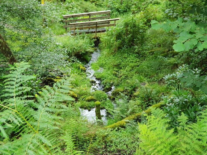 Pont en bois sur les paysages de vert de rivière photographie stock