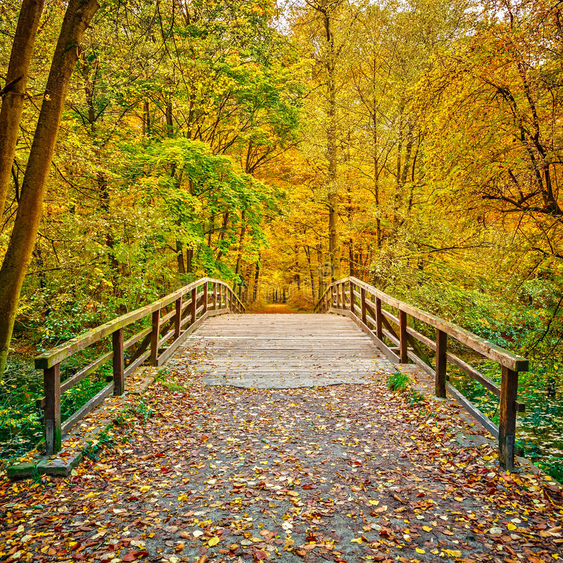 Pont en parc d'automne photo libre de droits