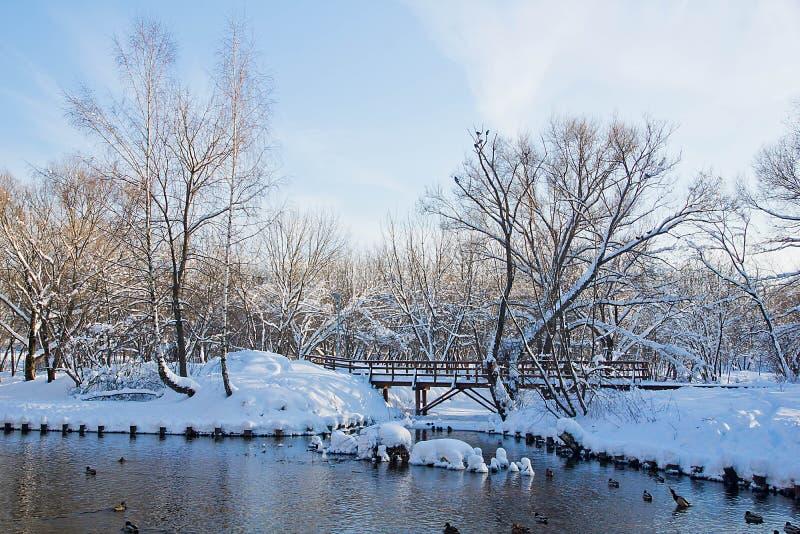 Pont et canards sur la rivière en parc d'hiver photo stock