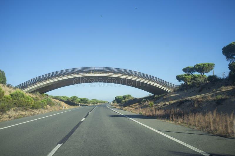 Pont ibérien de Lynx au-dessus N-442 de la route, Huelva, Espagne photo stock