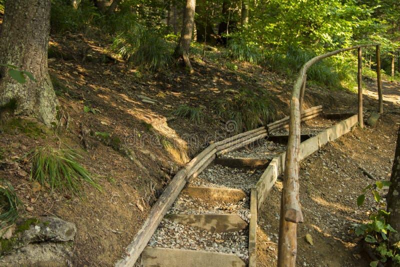 Download Pont par la forêt photo stock. Image du forêt, avant - 77155380