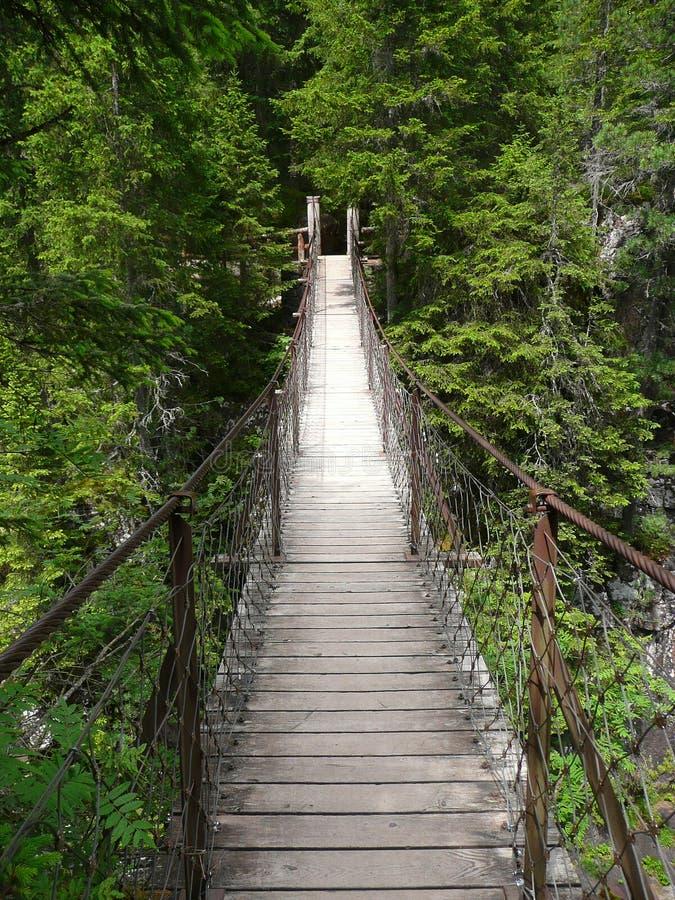 Pont suspendu dans la forêt illustration stock