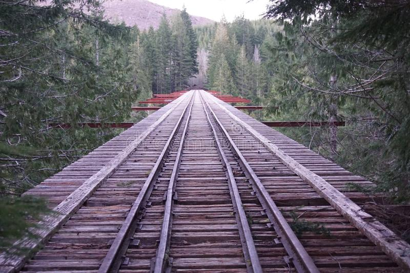 A ponte atrás dos ramos imagem de stock