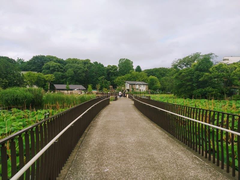 Ponte através do lago em um Japão imagens de stock royalty free