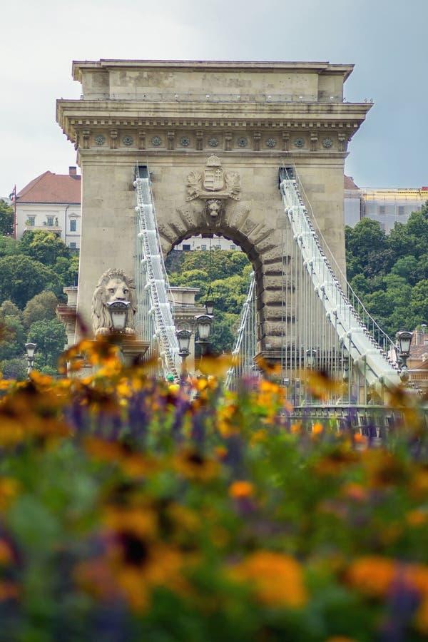 Ponte Chain húngara no dia ao lado das flores no verão fotografia de stock