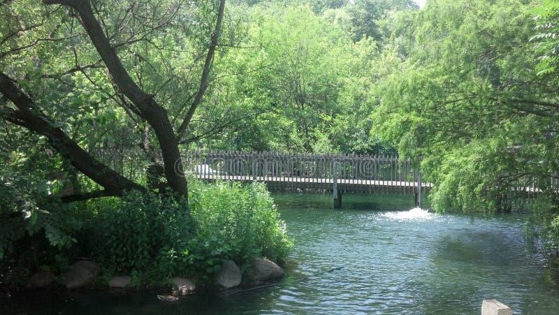 Ponte da área da floresta da água fotografia de stock royalty free