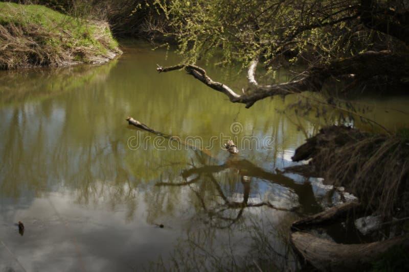 A ponte da madeira sobre o rio Lagoa na paisagem do verão da floresta no tempo morno ensolarado Resto na natureza Photophone imagem de stock royalty free