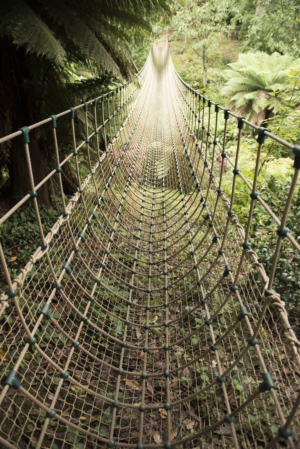 Ponte de corda da selva imagem de stock