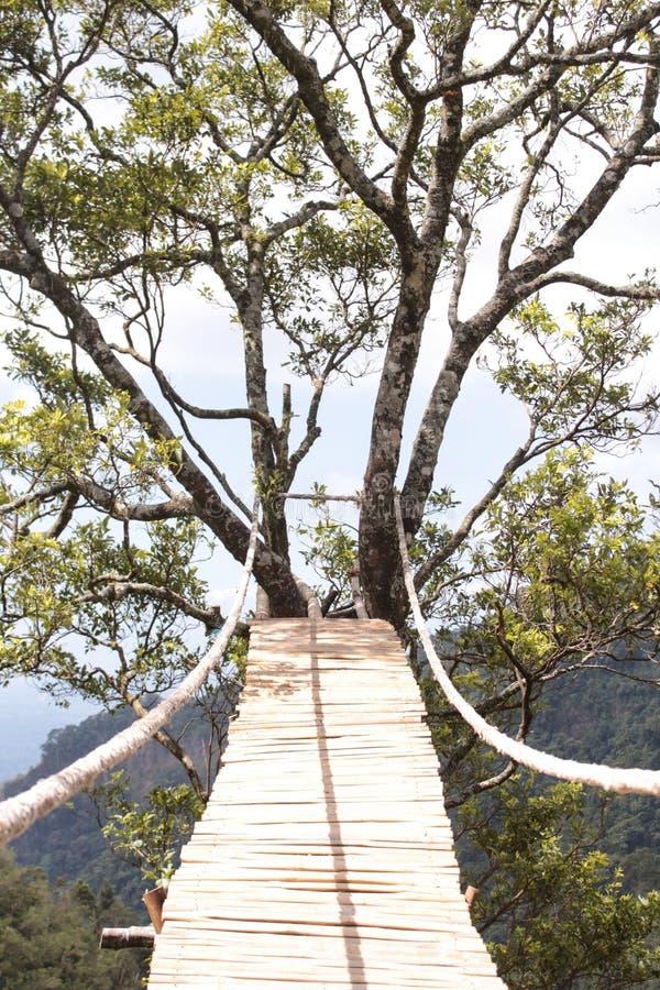 Ponte de corda perigosa de madeira fotos de stock