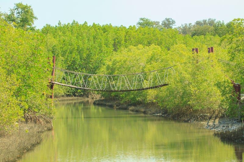 Ponte de corda sobre a floresta dos manguezais imagem de stock royalty free