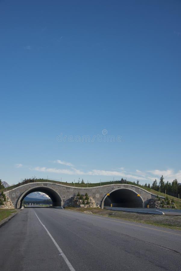 Download Ponte De Cruzamento Da Estrada Para Animais Foto de Stock - Imagem de estrada, wildlife: 29833736