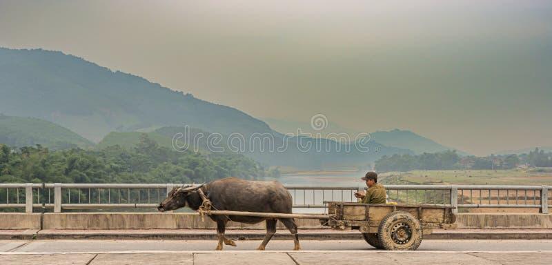 Ponte de cruzamento no carro de boi em Vietname fotografia de stock