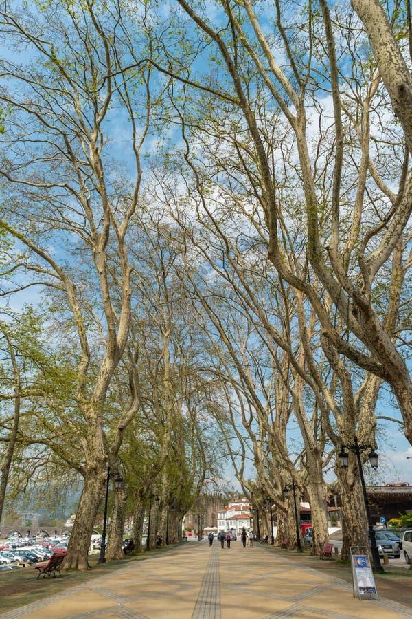 PONTE DE LIMA, PORTUGALIA - OKOŁO KWIECIEŃ 2018: Drzewo wykładający spaceru alon zdjęcia royalty free