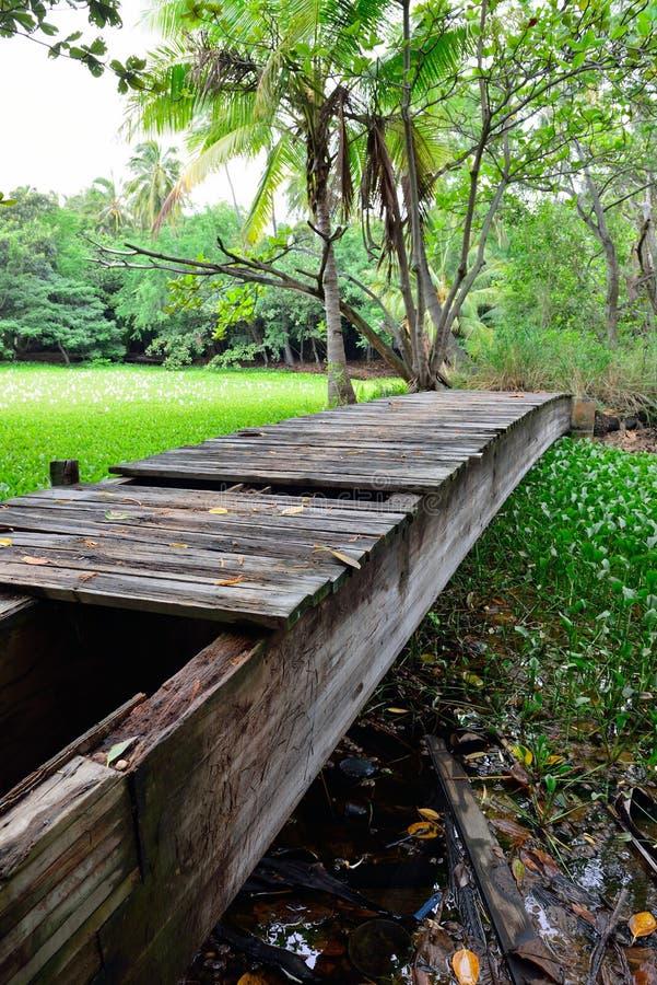 Ponte de madeira abandonada velha na floresta tropical na ilha grande de Havaí imagens de stock royalty free