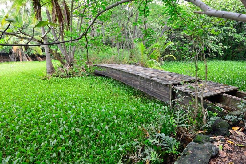 Ponte de madeira abandonada velha na floresta tropical na ilha grande de Havaí fotografia de stock