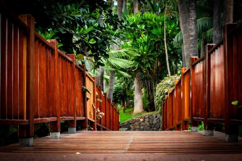 Ponte de madeira com as palmeiras no horizonte fotografia de stock royalty free