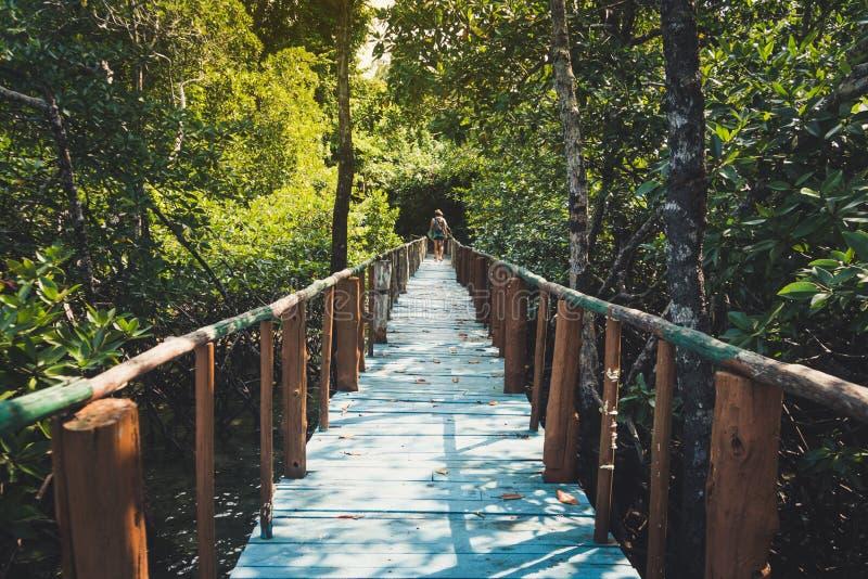 A ponte de madeira conduz à selva em Tailândia sob o céu azul imagem de stock royalty free
