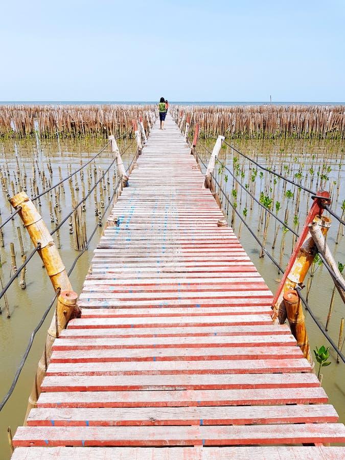 A ponte de madeira construída pelos povos através da floresta verde pequena dos manguezais e esticada ao mar vasto com o céu azul imagens de stock royalty free