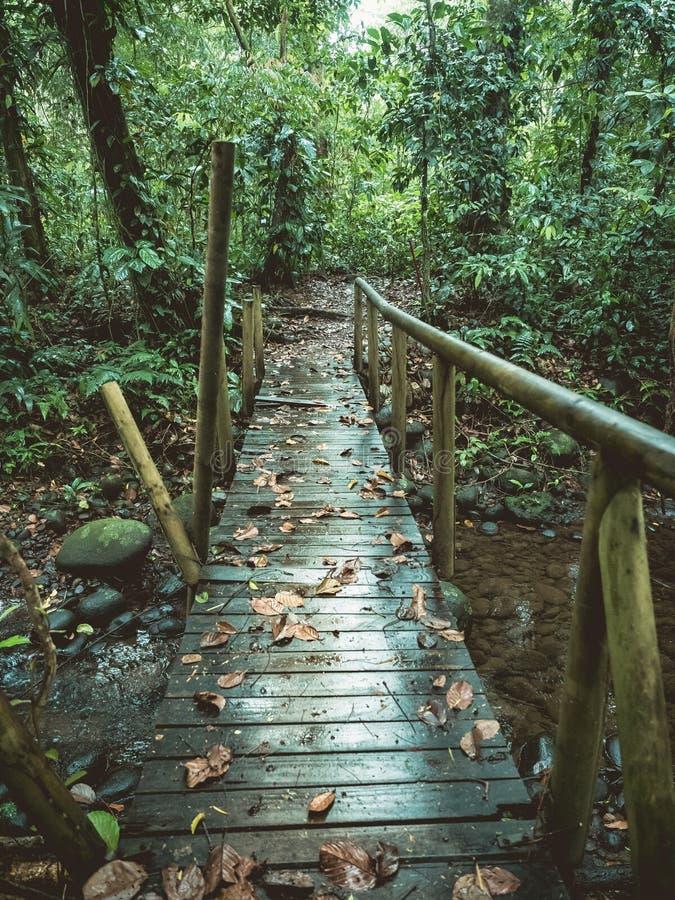 Ponte de madeira destruída na floresta fotografia de stock