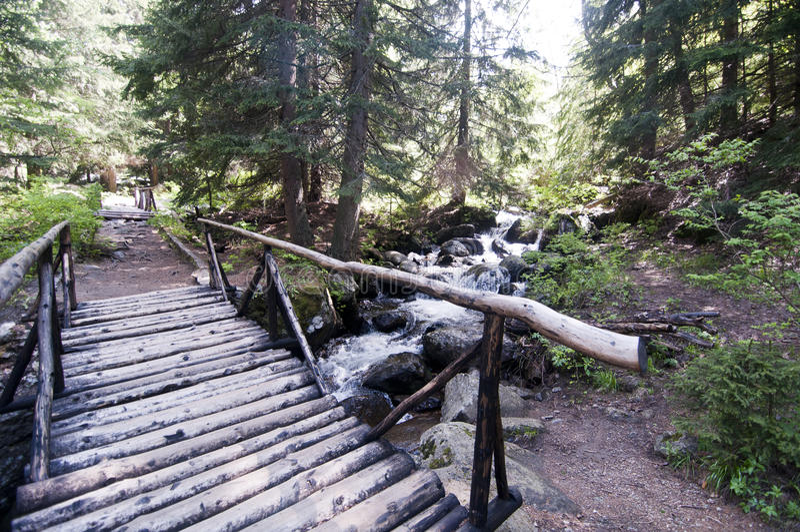 Ponte de madeira e caminho na floresta Bulgária da montanha de Vitosha imagem de stock royalty free