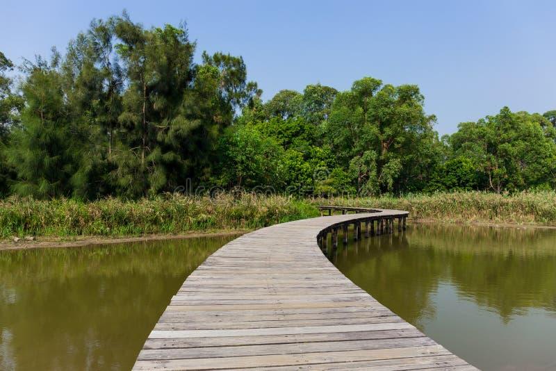 Ponte de madeira longa na floresta dos manguezais fotografia de stock royalty free