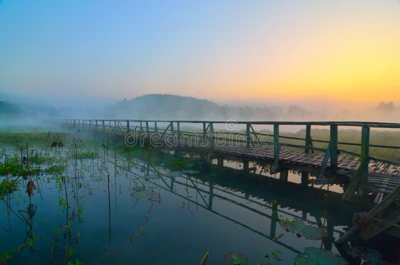 Ponte de madeira na floresta fotos de stock