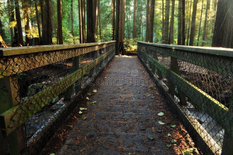 Ponte de madeira na floresta do vale de Lynn imagens de stock
