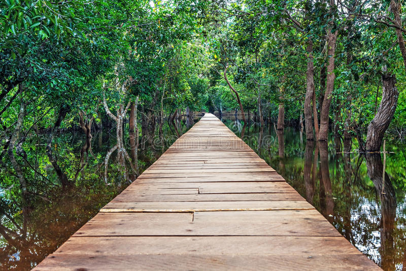 Ponte de madeira na selva. fotografia de stock