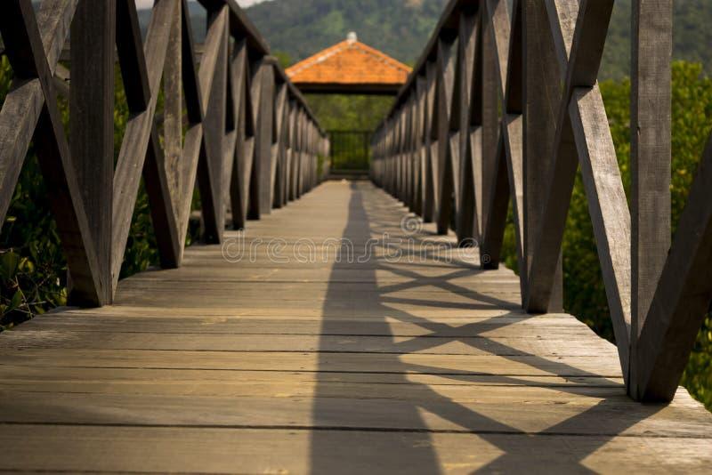 Ponte de madeira no campo dos manguezais imagens de stock