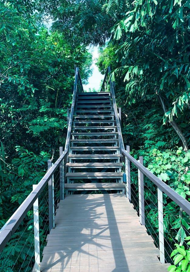 Ponte de madeira no parque imagem de stock royalty free