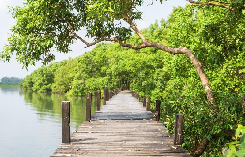 Ponte de madeira para a caminhada da natureza fotos de stock royalty free