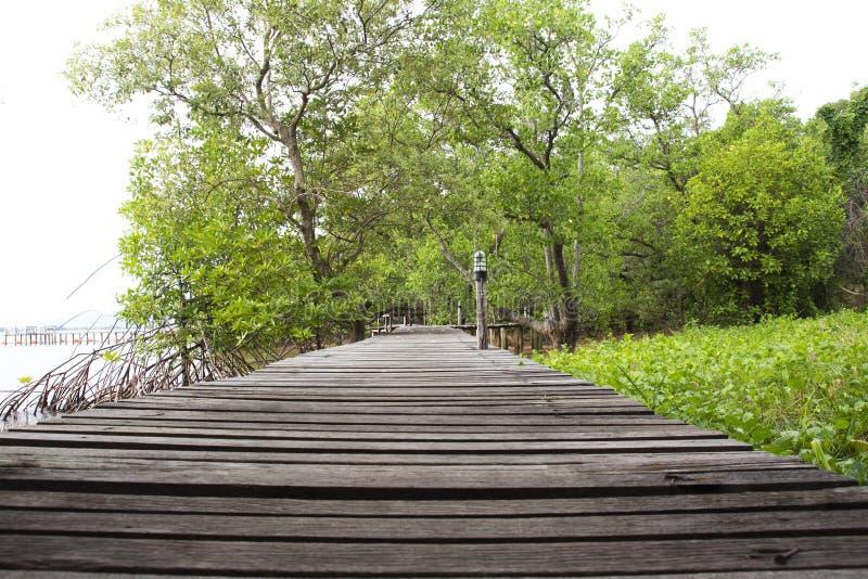 Ponte de madeira para a caminhada da natureza nos manguezais foto de stock royalty free