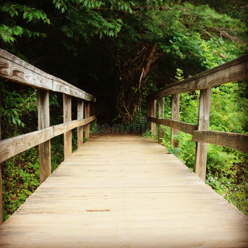 Ponte de madeira que conduz na floresta imagem de stock royalty free