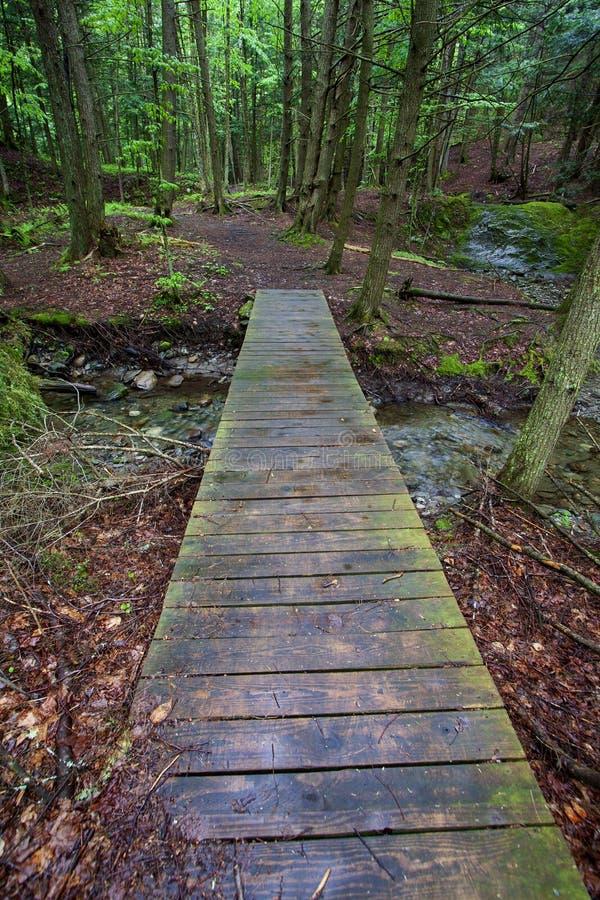 Ponte de madeira sobre o c?rrego da floresta foto de stock