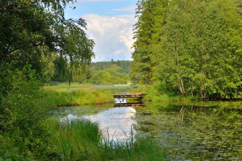 Ponte de madeira sobre o rio da floresta em um dia de verão fotos de stock royalty free