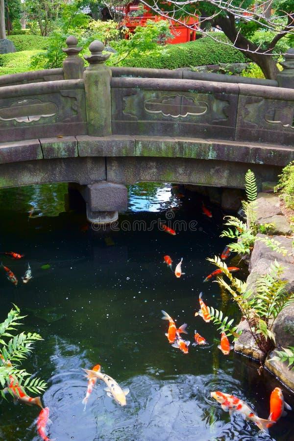 Ponte de pedra no jardim japonês sobre a lagoa da carpa do koi imagens de stock
