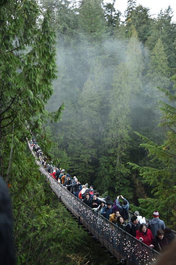 Ponte de suspensão de Capilano fotografia de stock