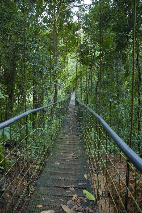 Ponte de suspensão na selva rican da costela imagens de stock royalty free