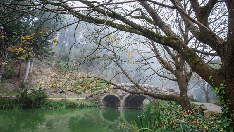 Ponte della pietra del lago stow ed alberi morti nel parco di Golden State, San Francisco su una mattina nebbiosa di inverno immagini stock libere da diritti