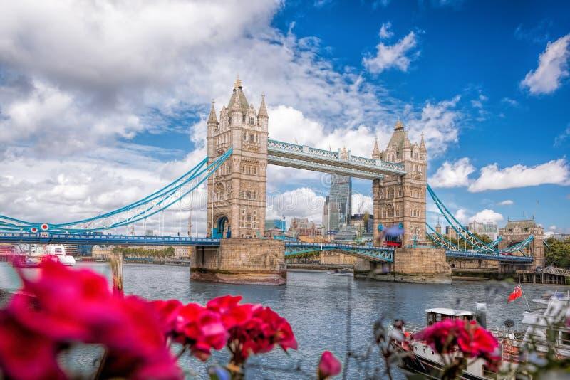 Ponte della torre con i fiori a Londra, Inghilterra, Regno Unito fotografia stock