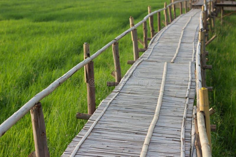 Ponte di bambù con il fondo del giacimento del riso fotografia stock
