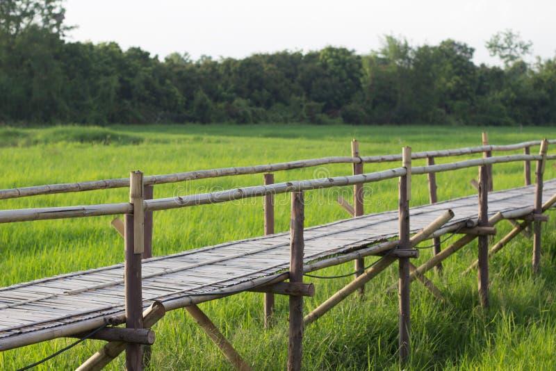 Ponte di bambù con il fondo del giacimento del riso immagini stock