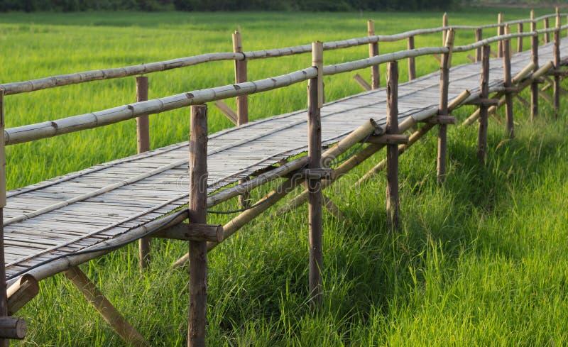 Ponte di bambù con il fondo del giacimento del riso immagine stock