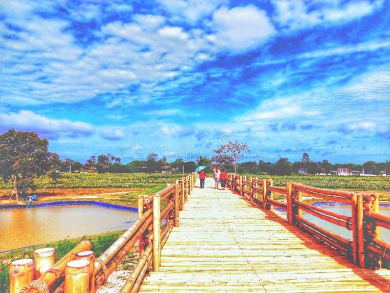 Ponte di bamb? fotografia stock libera da diritti