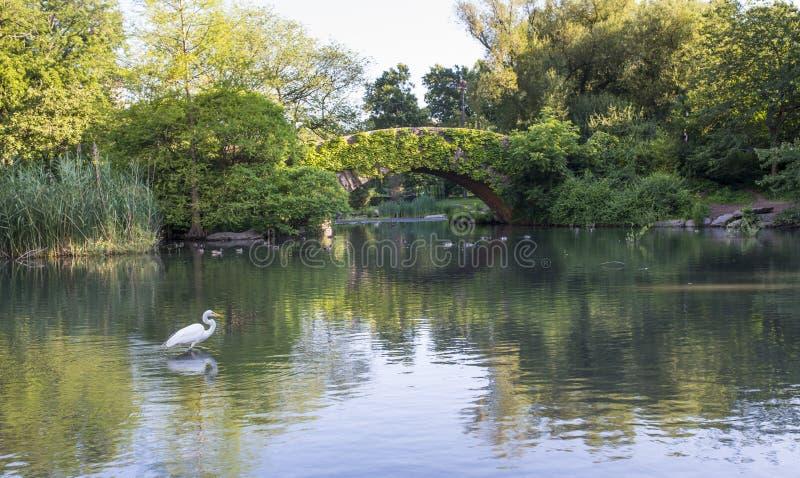Ponte di Gapstow di estate fotografie stock